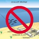 """The Impact Of Inshore Scallop Dredging"""