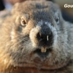 """Groundhog Day in Filey"""